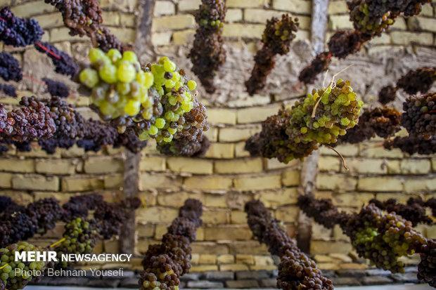 فراوری 8 رقم انگور بی دانه حبه درشت توسط محققان کشور